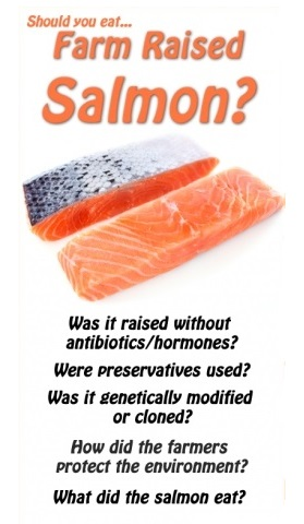 salmon-farmed-or-wild